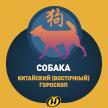 Собака: Китайский (Восточный) гороскоп, характеристика знака, совместимость