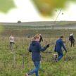 Экологическая акция «День озеленения» проходит по всей Беларуси. Принять участие может каждый
