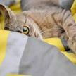 Реакция котов на чихнувшего хозяина рассмешила Сеть