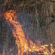 Глава МЧС: в отношении палов сухой растительности надо принимать более жесткие меры