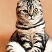 Кот попытался спасти друга-пса, которому делали укол (ВИДЕО)