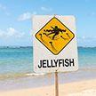 Медузы атаковали пляжи Австралии