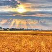 МЧС удалось спасти от огня поле пшеницы в Минском районе