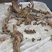 Эксперты разгадали, чей скелет был найден в заброшенном доме в Смолевичском районе