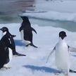 Белорусская научная экспедиция отправляется в Антарктиду
