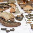 Древние артефакты обнаружили в Полоцке