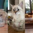Научно доказано: коты – это жидкость! 15 пушистиков, которые покорят ваши сердца!