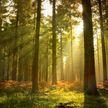 Отчим оставил пасынка в машине и пошёл в лес: ребёнок пропал
