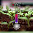 Как вырастить рассаду томатов и огурцов. О чем надо знать, чтобы получить хороший урожай?