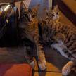 Парень привез из кафе кошку: она сама запрыгнула к нему в машину – теперь он ее обожает (ВИДЕО)