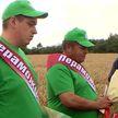 Первую тысячу тонн зерна уже намолотили в Бресте