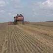 На полях Беларуси убрали почти миллион тонн зерна