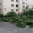 Непогода в Беларуси: повалены деревья, повреждены автомобили и дома