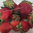 Начинённые иглами фрукты обнаружили в магазинах Австралии