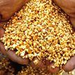 Залежи золота нашли в Столбцовском районе