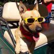 Собака научилась водить трактор. Только посмотрите, это удивительно! (Видео)
