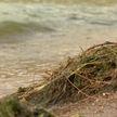 Минское море окрасилось в зеленый цвет – безопасно ли купаться?