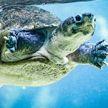 Черепаха спасла умирающую на суше рыбу и попала на видео