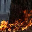 Свыше 1400 природных пожаров произошло в Беларуси с начала года