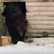 В российском зоопарке отравили мышьяком двух медведей